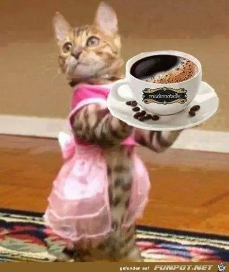 Cafe bitte