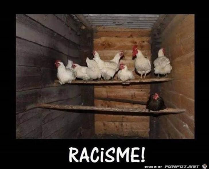 Schwarzes Huhn