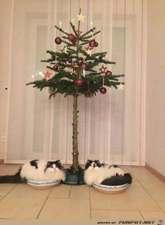 Klasse Baum