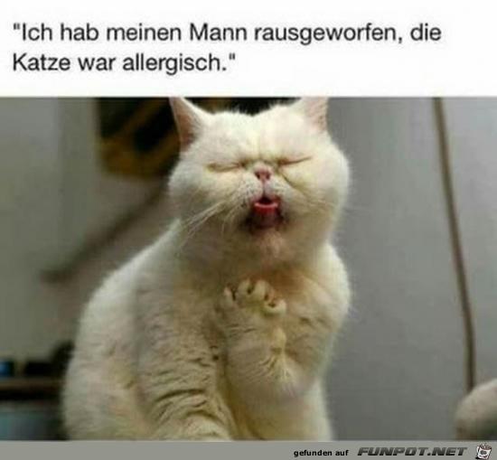 Allergische Katze