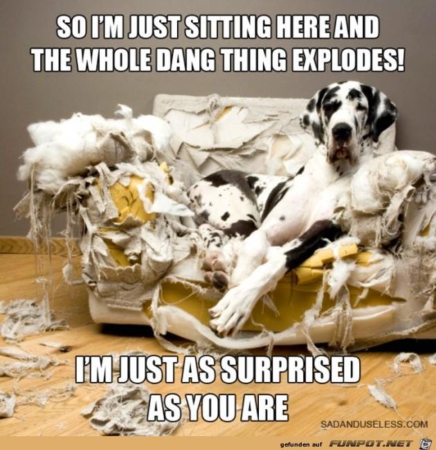 nicht-ganz-unschuldige-Hunde-4