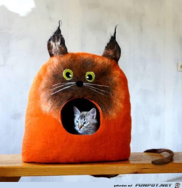 Lustige Katzenhöhle