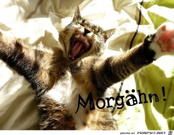 Morgaehn