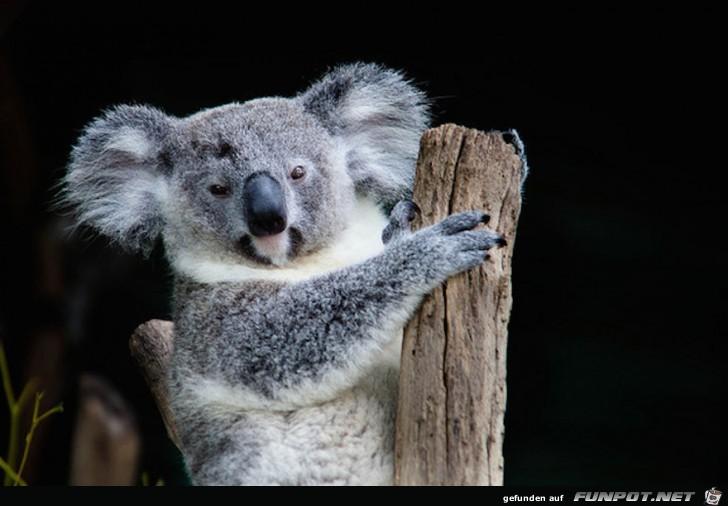 Australische Tierwelt 1