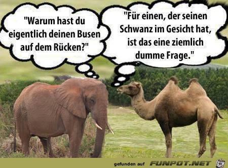 Elefant und Kamel