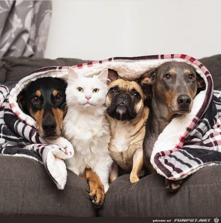 Die Katze ist der Chef