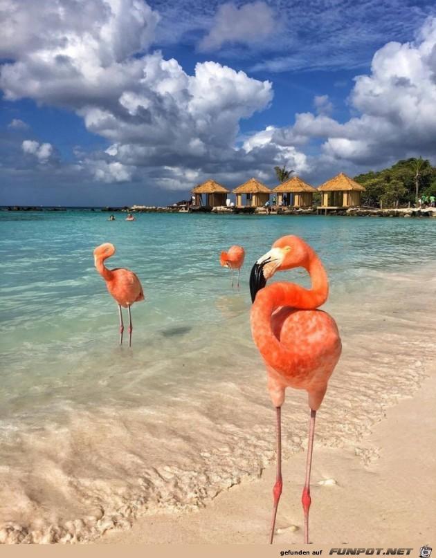 Flamingos Hawaii