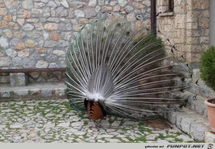 mehr Impressionen aus dem Kloster Sveti Naum (Mazedonien)