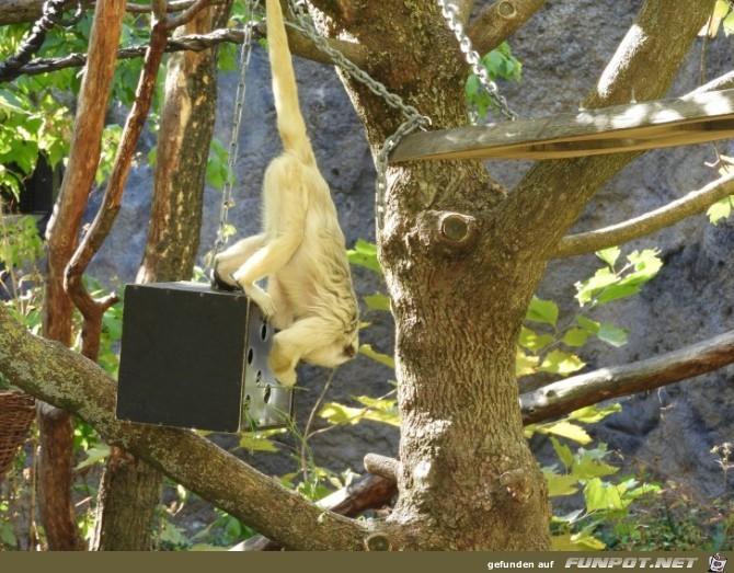 Impressionen aus dem Zoo Leipzig Teil 1