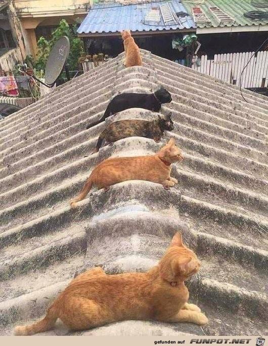 Katzen-Dach