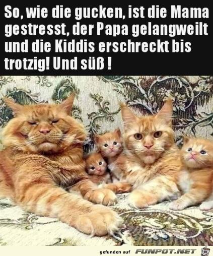 Witzige Katzen-Familie