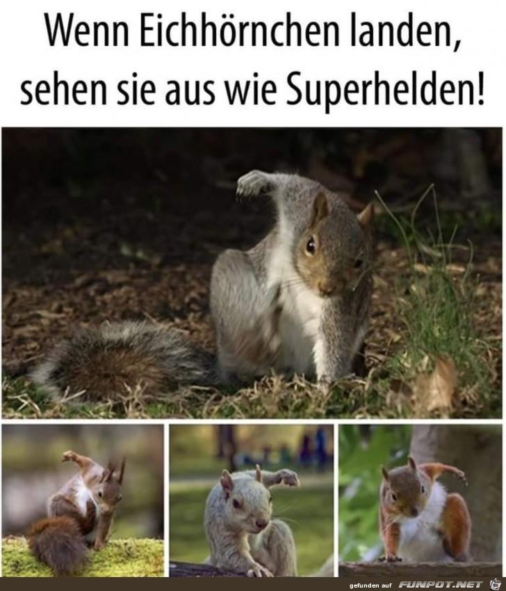 Eichhörnchen landen