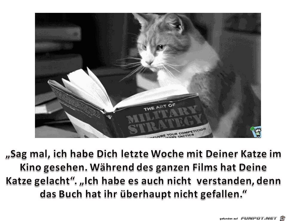 Katze-im-Kino.jpg auf www.funpot.net