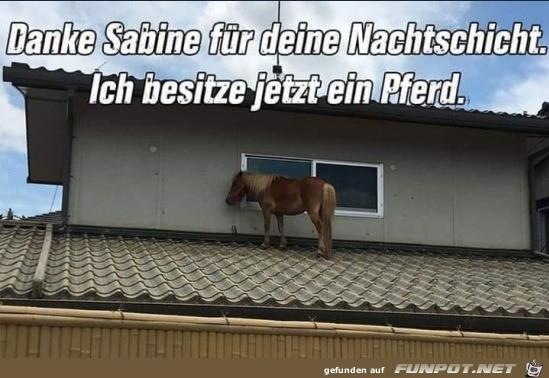 Dank Sabine habe ich jetzt ein Pferd