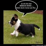 Ja-ich-bin-der-bissige-....jpg auf www.funpot.net
