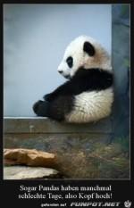 Panda-ist-schlecht-drauf.jpg auf www.funpot.net