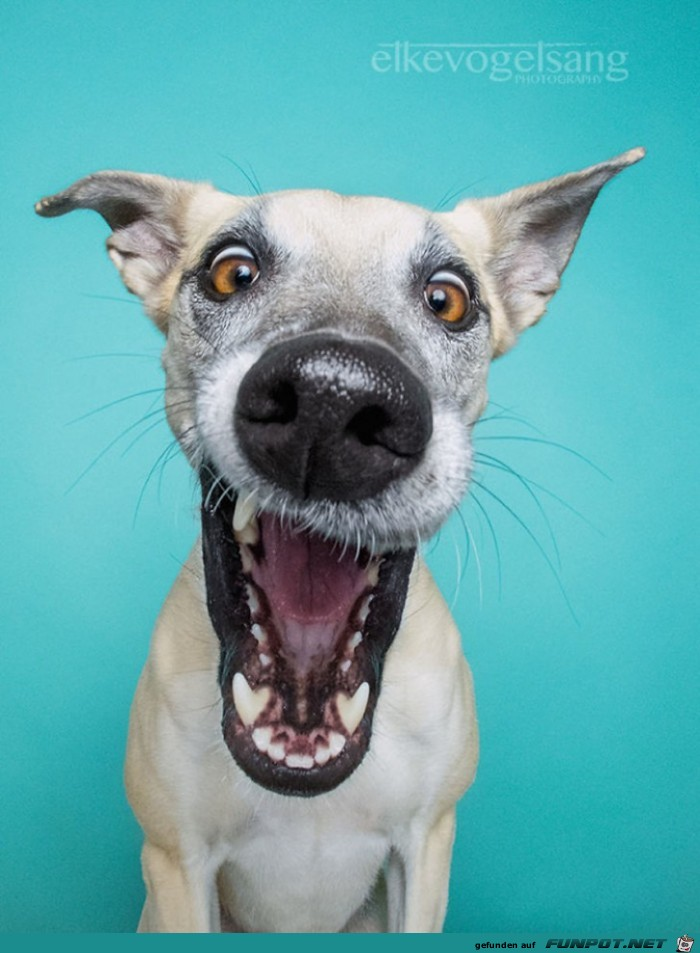 Hunde Lustige Bilder