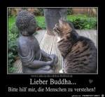 Lieber-Buddha.jpg auf www.funpot.net
