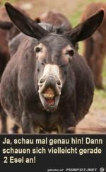 Zwei-Esel.jpg auf www.funpot.net