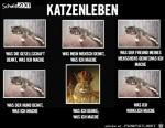 Katzenleben.jpg auf www.funpot.net