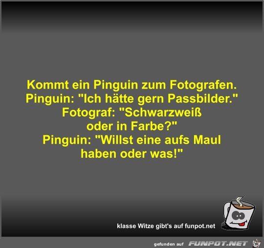 Kommt Ein Pinguin Zum Fotografen