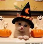 Halloween-Kätzchen.jpg auf www.funpot.net