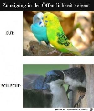 Zuneigung-in-der-Öffentlichkeit-zeigen.jpg auf www.funpot.net