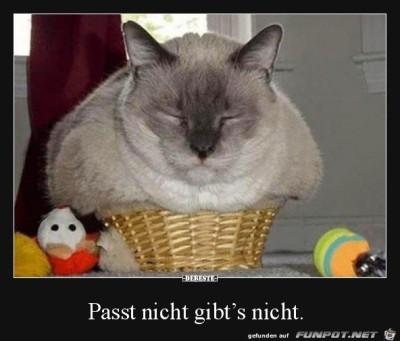 Passt-nicht-gibts-nicht.jpg von Desiree