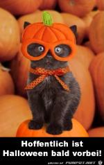 Halloween.png auf www.funpot.net