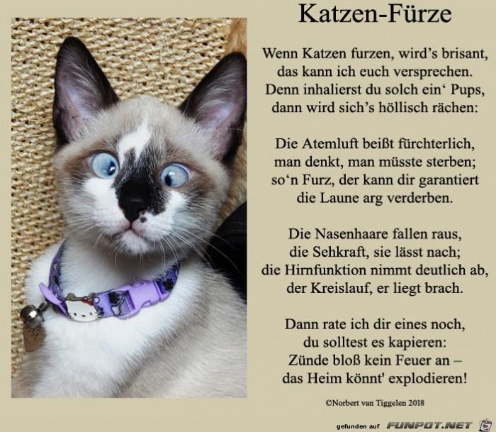 Katzen-Fürze 2018