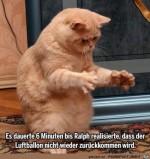 So-herrlich-diese-Katze.jpg auf www.funpot.net