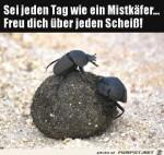 Wie-ein-Mistkäfer.jpg auf www.funpot.net
