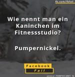 Kaninchen-im-Fitness-Studio.jpg auf www.funpot.net