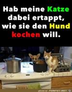 Böse-Katze.png auf www.funpot.net