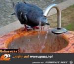 Abkühlung.jpg auf www.funpot.net