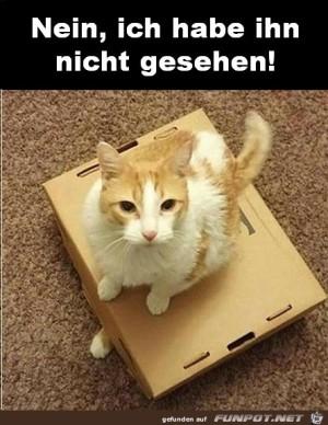 Nein-ich-habe-die-neue-Katze-nicht-gesehen.jpg auf www.funpot.net