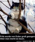 Eule.jpg auf www.funpot.net