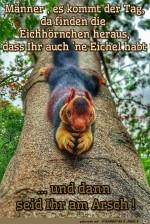 Eichhörnchen.jpg auf www.funpot.net