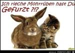 Mohrrüben.jpg auf www.funpot.net