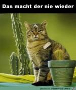 Dämlicher-Kaktus.jpg auf www.funpot.net