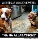 Pitbulls.jpg auf www.funpot.net