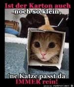 Katze-passt-überall-rein.jpg auf www.funpot.net