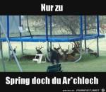 spring-ruhig.jpg auf www.funpot.net