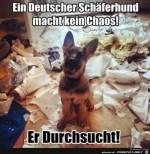 deutscher-Schäferhund.jpg auf www.funpot.net