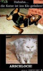 Hund-vs.-Katze.jpg auf www.funpot.net
