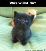 was-ist.png auf www.funpot.net