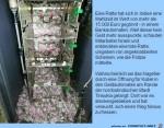 Ratte-hat-sich-eine-Mahlzeit-von-15.000-Euro-gegönnt.jpg auf www.funpot.net