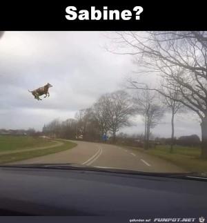 Achtung-Sabine-von-links.jpg auf www.funpot.net