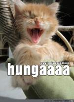 Hungaaaa.jpg auf www.funpot.net