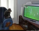 Spannendes-Spiel-für-die-Katzen.jpg auf www.funpot.net